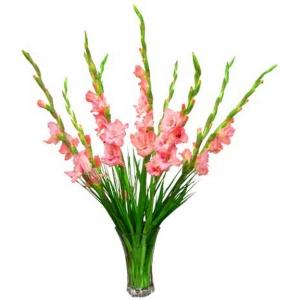 Hoa lay ơn Đà Lạt
